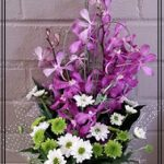 orchiddaisy