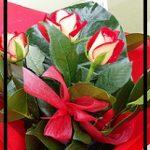 rosetriored